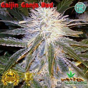 Gaijin Ganja Bud
