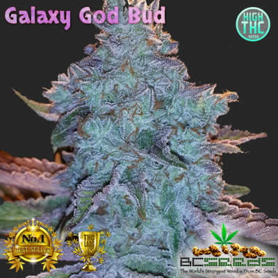 Galaxy God Bud