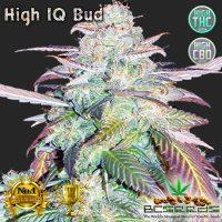 High IQ Bud