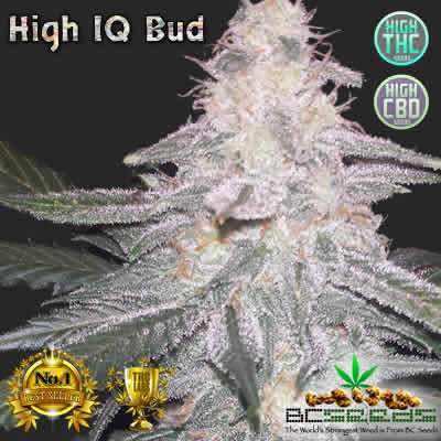 Shop Buy High Thc Level Cbd Marijuana Seeds Online In Canada