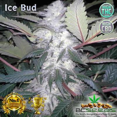 Ice Bud