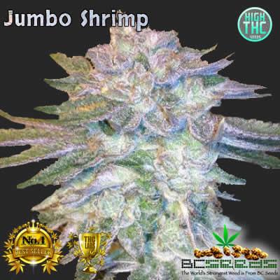 Jumbo Shrimp Bud