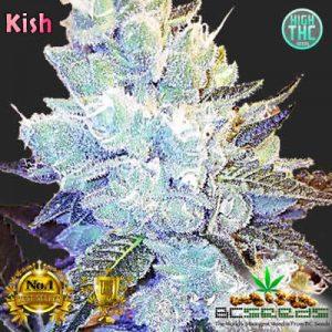 Kish Bud
