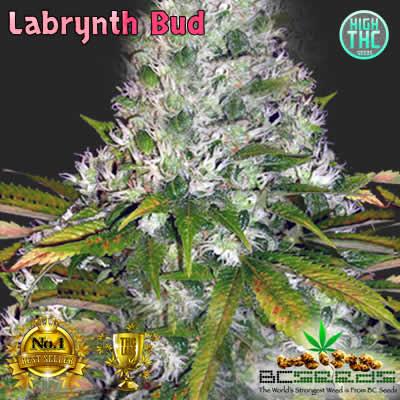Labrynth Bud