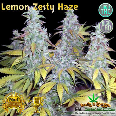 Lemon Zesty Haze
