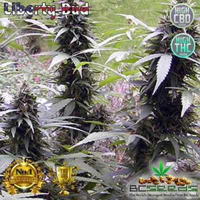 Liberty Bud