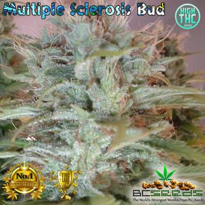 Multiple Sclerosis Bud