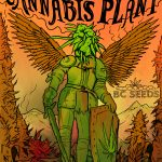 Never Dies Cannabis Plant BC Seeds