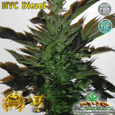 NYC Diesel