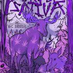 Purple Sativa BC Seeds