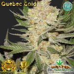 Quebec Gold