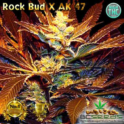 Rock Bud X AK 47