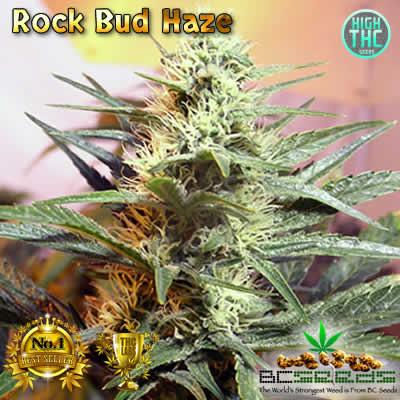 Rock Haze