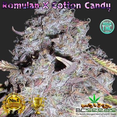 Romulan X Cotton Candy