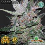 Shade Bud