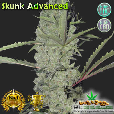 Skunk Advanced