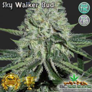 Sky Walker Bud