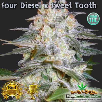 Sour Diesel x Sweet Tooth Bud