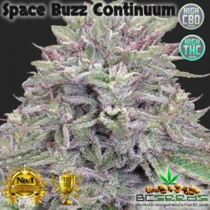 Space Buzz Continuum Bud
