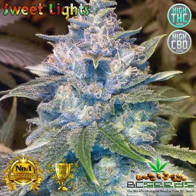 Sweet Lights Bud