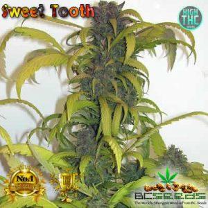 Sweet Tooth Bud