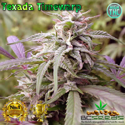 Texada Timewarp Bud