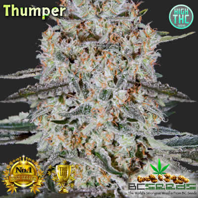 Thumper Bud