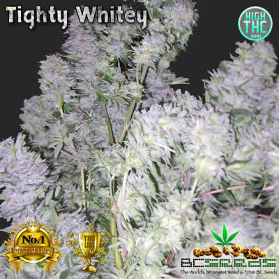 Tighty Whitey Bud