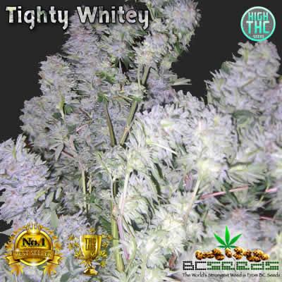 Tighty Whitey Bud