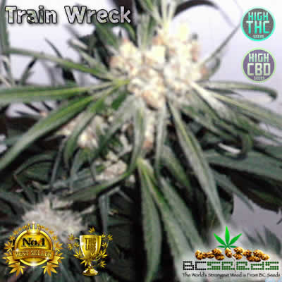 Train Wreck Bud