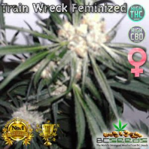 Train Wreck Feminized