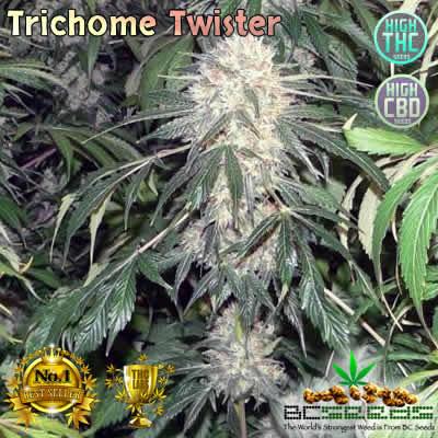 Trichome Twister Bud