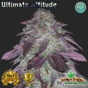 Ultimate Altitude Bud
