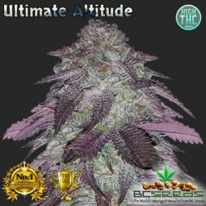 Ultimate Altitude Bud