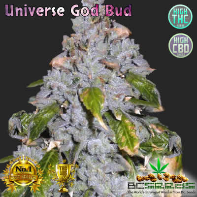 Universe God Bud