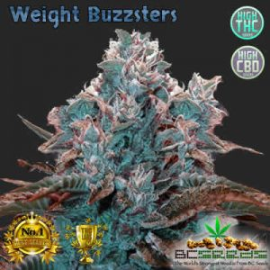 Weight BuZZsters Bud