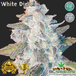 White Diesel Bud