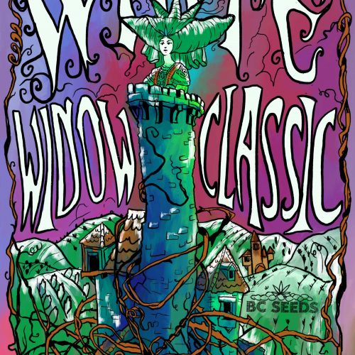 White Widow Bud Classic
