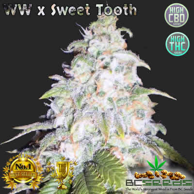 White Widow x Sweet Tooth