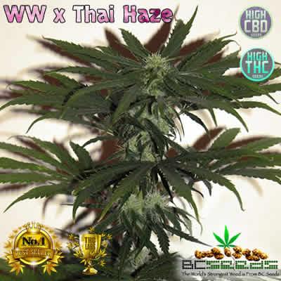 White Widow x Thai Haze