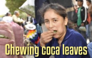 Chew Coca Leaves