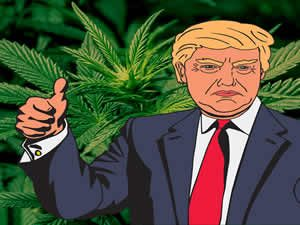 Trump Cannabis Policy