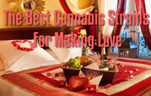 Best Cannabis Strains Making Love