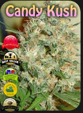 Candy Kush Highest Profits