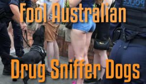 Fool Australian Drug Sniffer Dogs