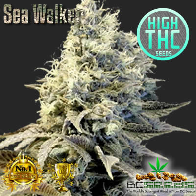 Sea Walker Bud