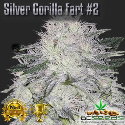Silver Gorilla Fart No2