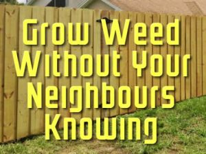 Grow Weed Without Your Neighbours Knowing