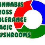 Cannabis Cross Tolerance Magic Mushrooms