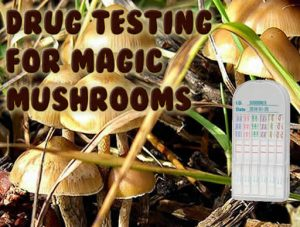 Drug Testing For Magic Mushrooms